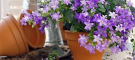 цветята не се чустват добре в саксии