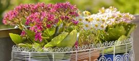 цветя на балкон